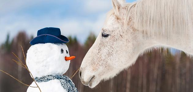 quelle alimentation pour votre cheval durant l 39 hiver 20 11 2015. Black Bedroom Furniture Sets. Home Design Ideas