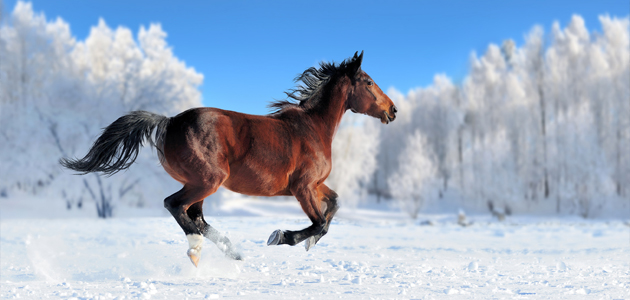 photo cheval hiver